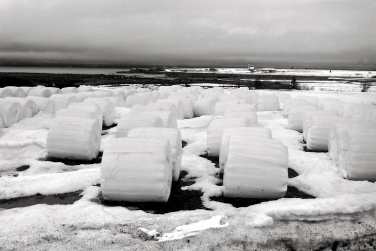 Bales of hay, Northumberland Strait, NS